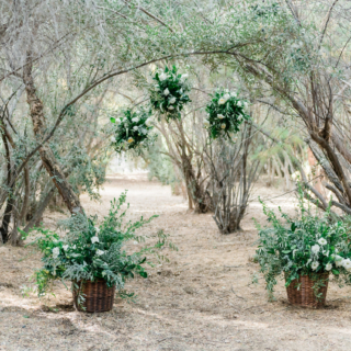 the olive grove page