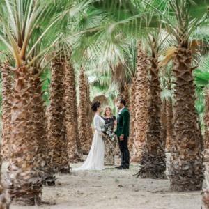 palm tree oasis page